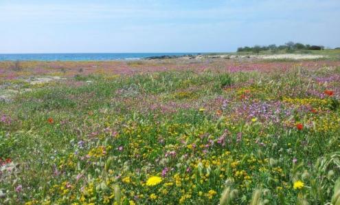 Specchiarica Punta Prosciutto Situata nell estremo nord occidentale della provincia di Lecce