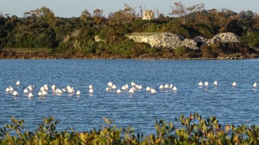 Spiaggia Salina dei Monaci Manduria fenicotteri