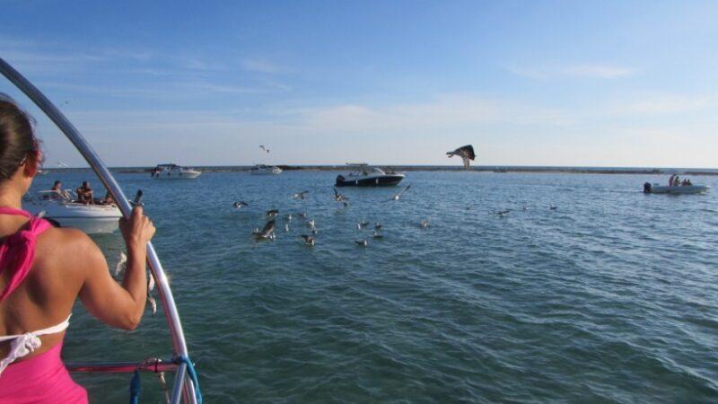Escursioni in barca porto cesareo