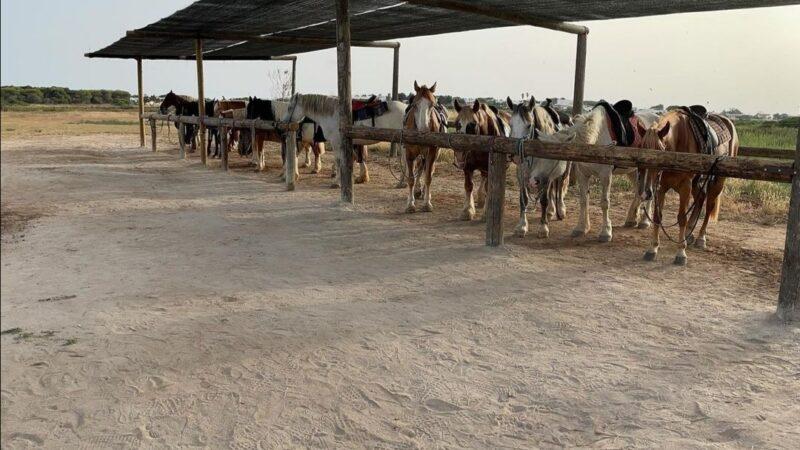 Maneggio cavallo passeggiata porto cesareo