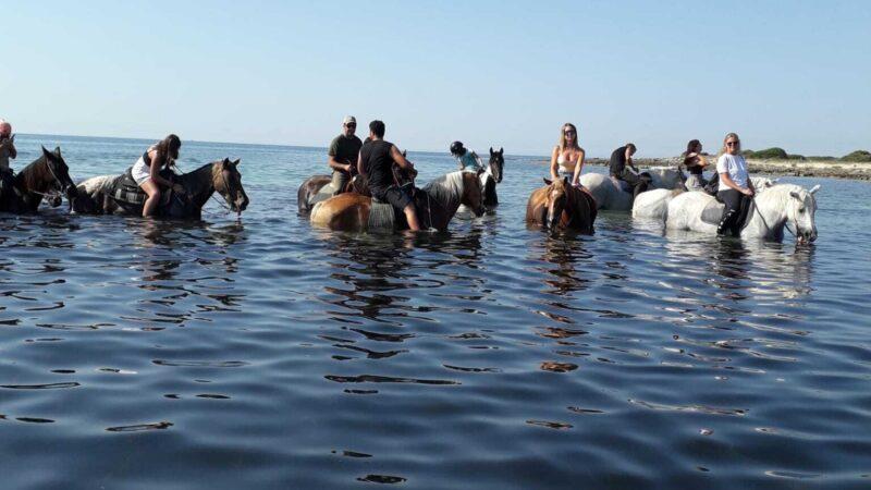 Mare cavallo spiaggia