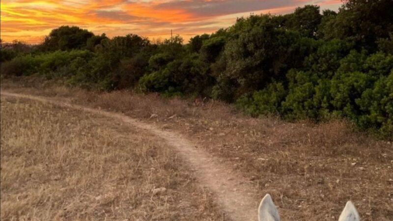 Passeggiata cavallo tramonto porto cesareo
