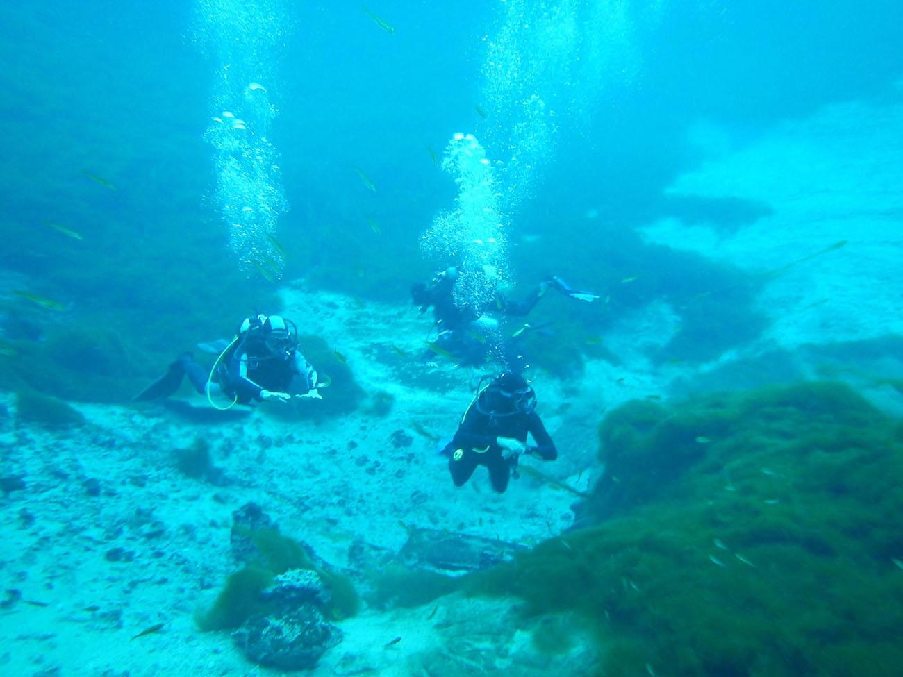 Orca diving6