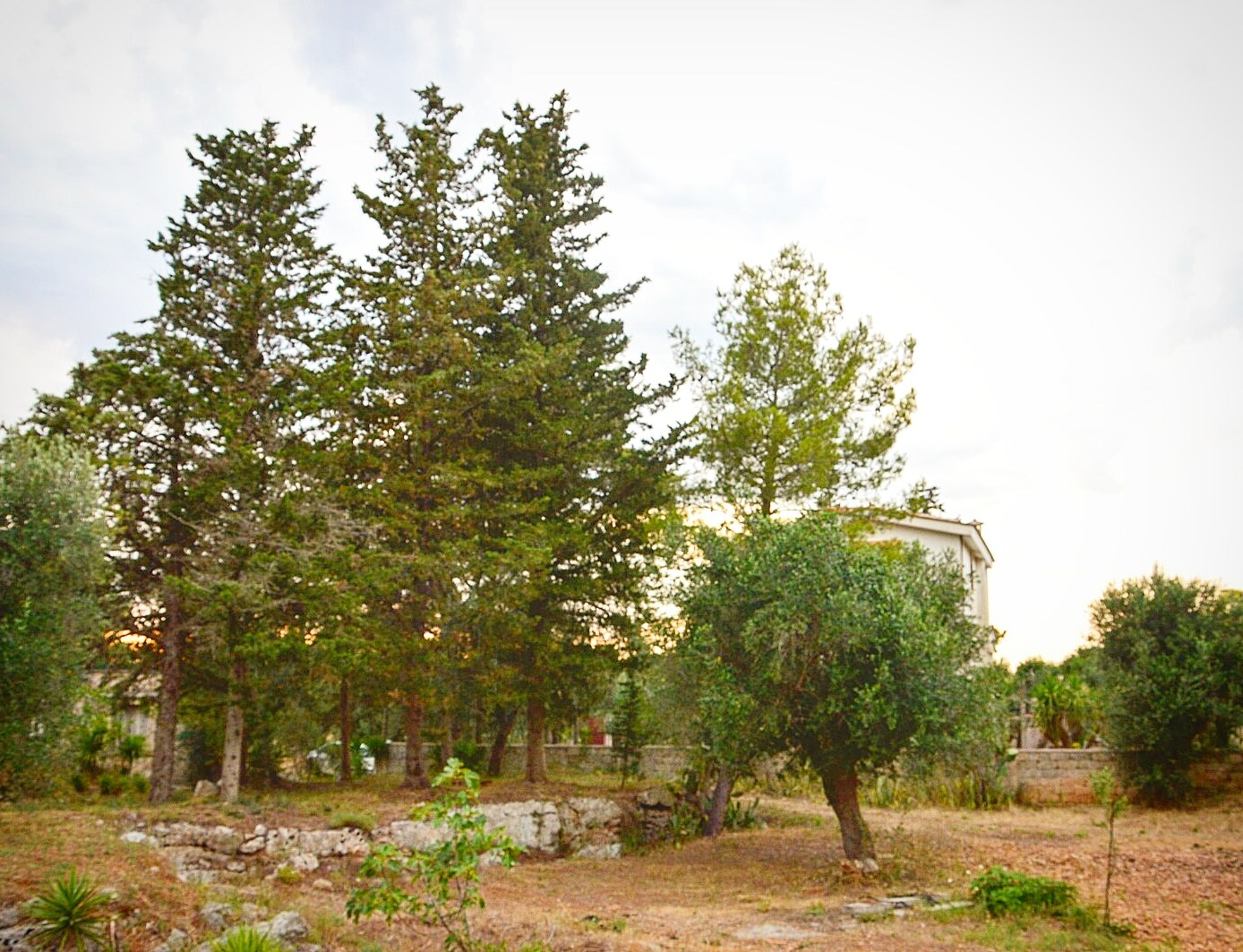 Parco san cosimo park