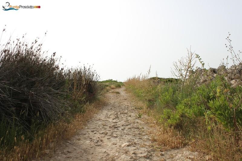 Penisola penisola della strea 81 D