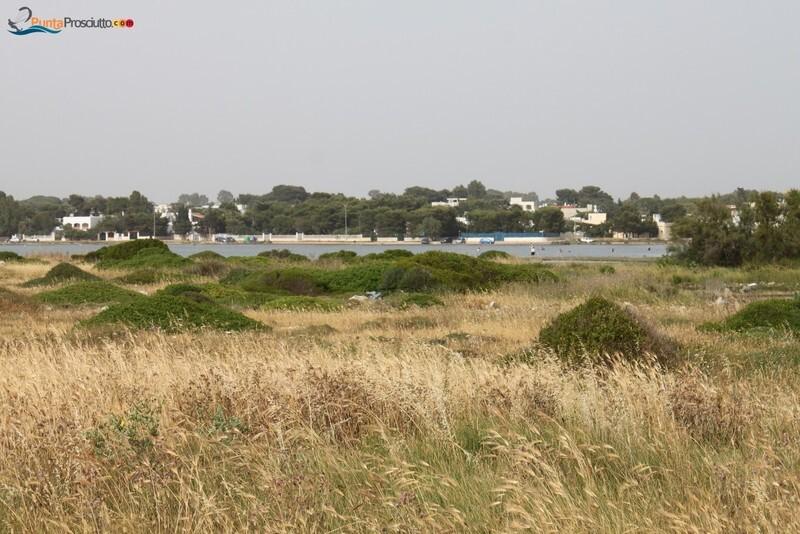 Penisola penisola della strea CX5