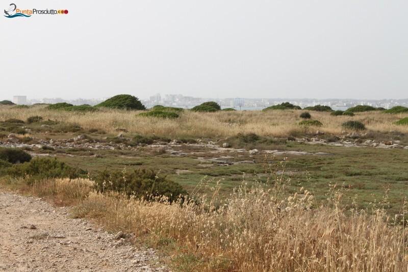 Penisola penisola della strea IX4