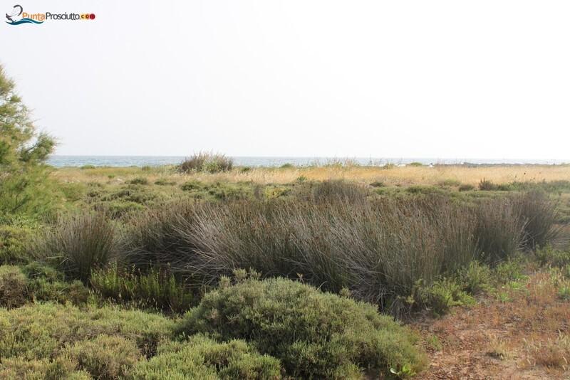 Penisola penisola della strea Mlt