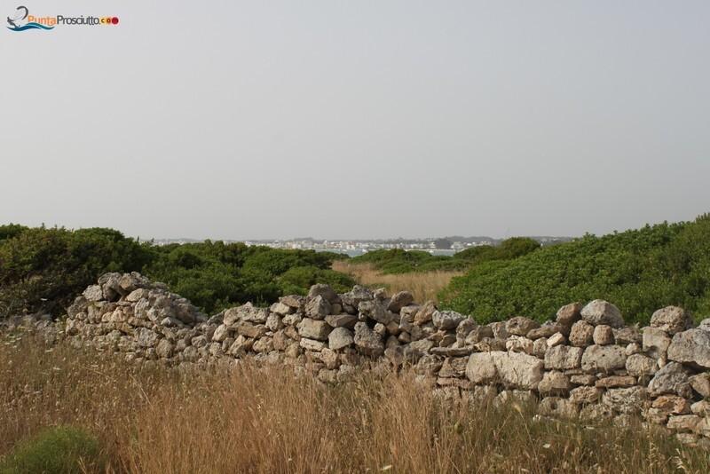 Penisola penisola della strea S5q
