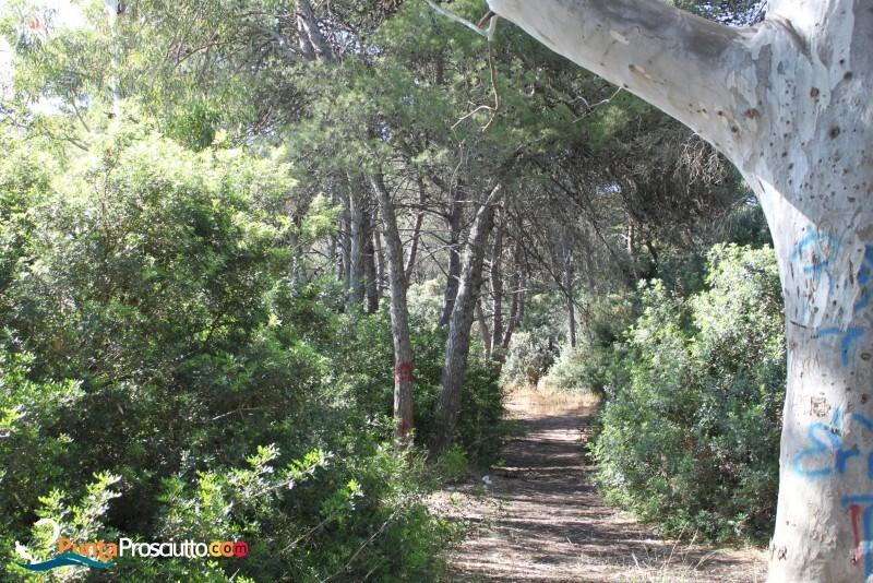 Riserva palude del conte bosco dell arneo Ugt