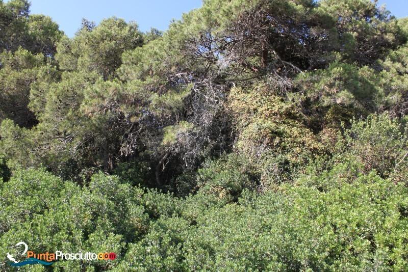 Riserva palude del conte bosco dell arneo V Nr