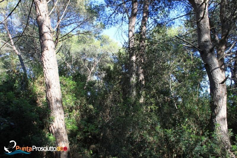 Riserva palude del conte bosco dell arneo Xof