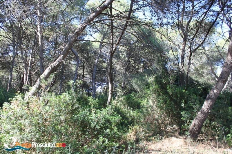 Riserva palude del conte bosco dell arneo c9 N