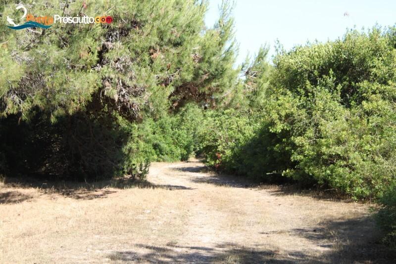 Riserva palude del conte bosco dell arneo k4 K