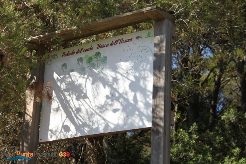 Riserva palude del conte bosco dell arneo o Bn
