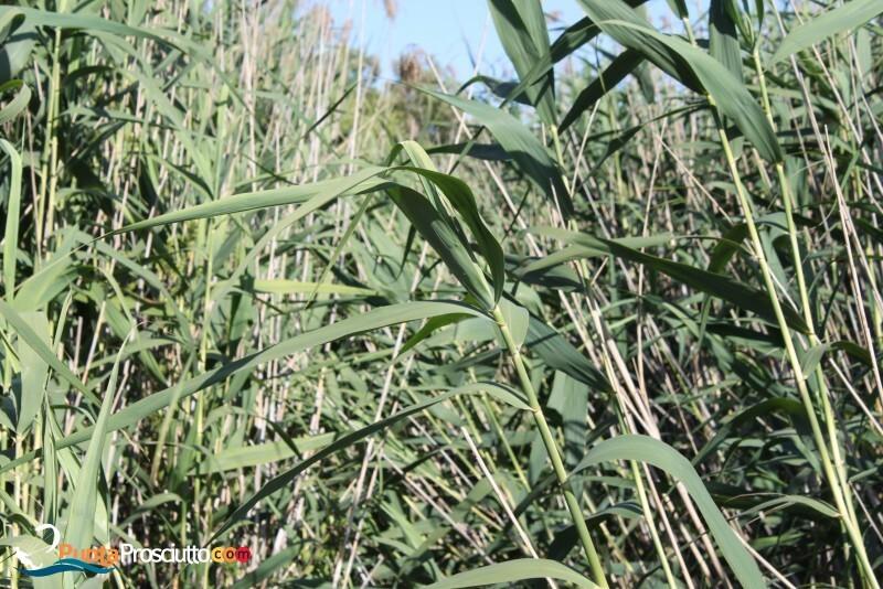 Riserva palude del conte bosco dell arneo w U8