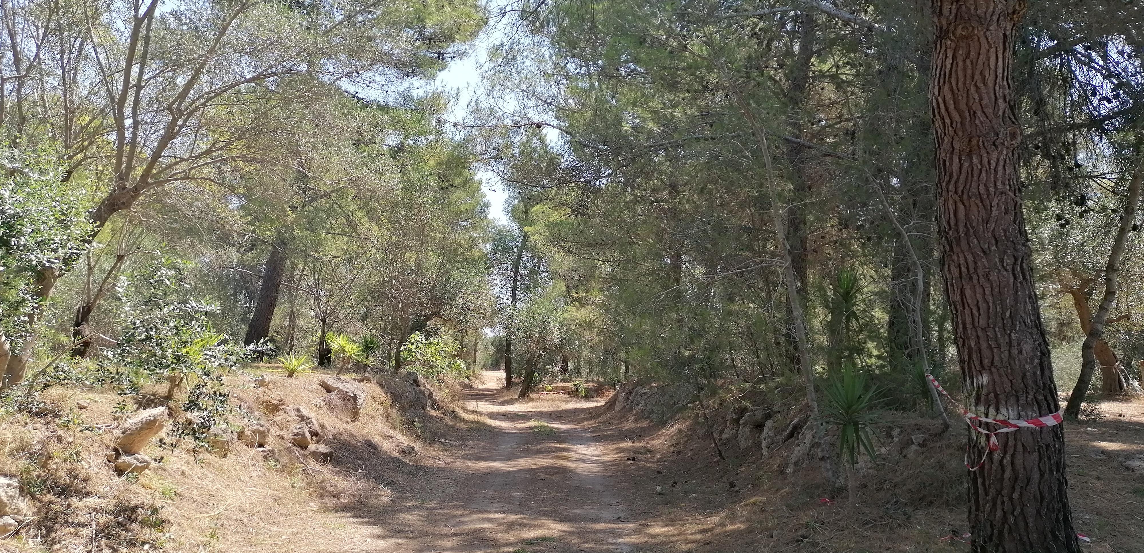 Percorso San Cosimo Park