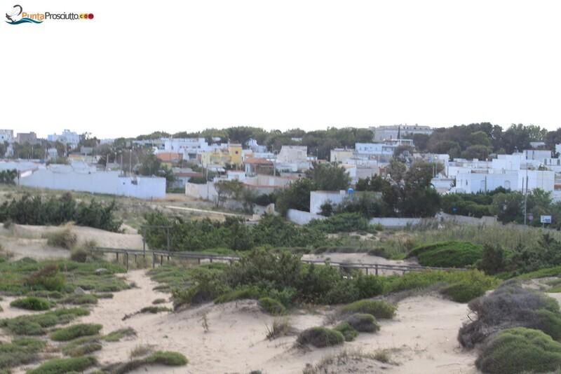 Spiaggia dune di campo marino 371
