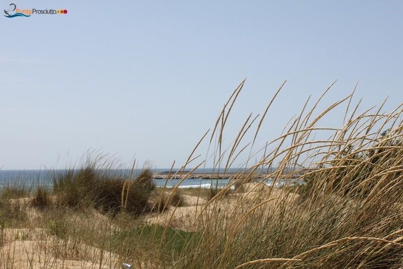 Spiaggia dune di campo marino 4 Qc
