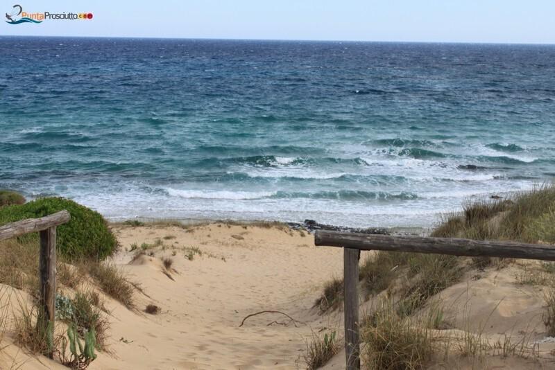Spiaggia dune di campo marino Frn