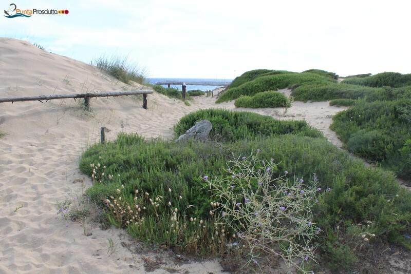 Spiaggia dune di campo marino Xo T
