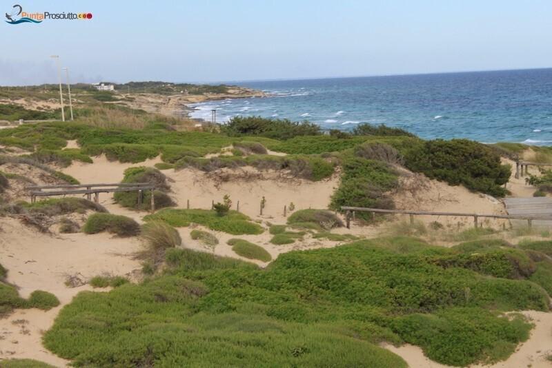 Spiaggia dune di campo marino fv3