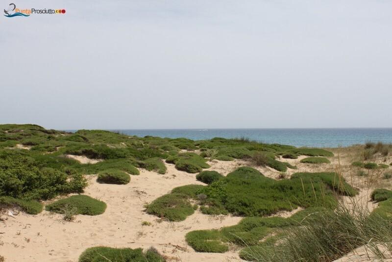 Spiaggia dune di campo marino hz I