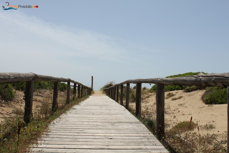 Spiaggia dune di campo marino orq