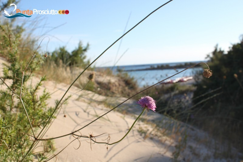 Spiaggia spiaggia di torre chianca SX5