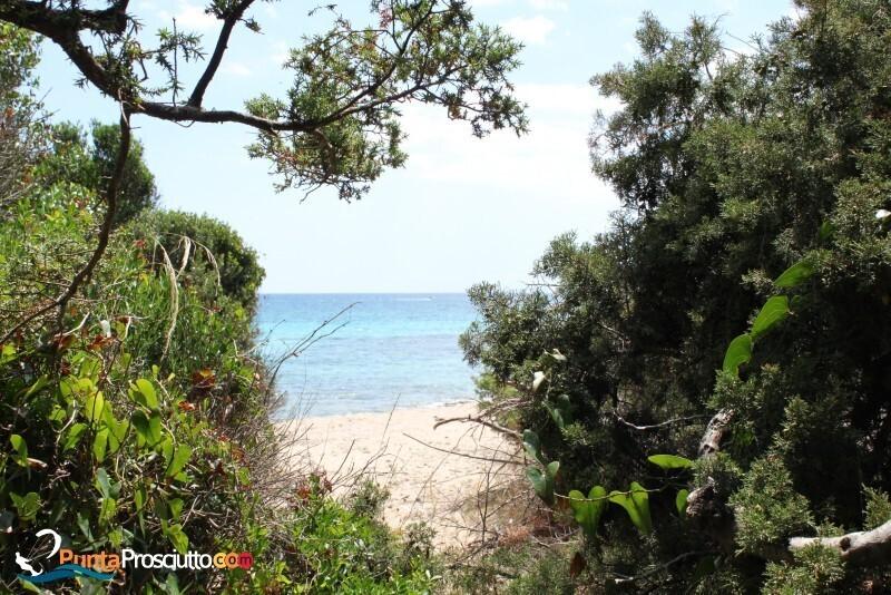 Spiaggia spiaggia riva degli angeli U Ef