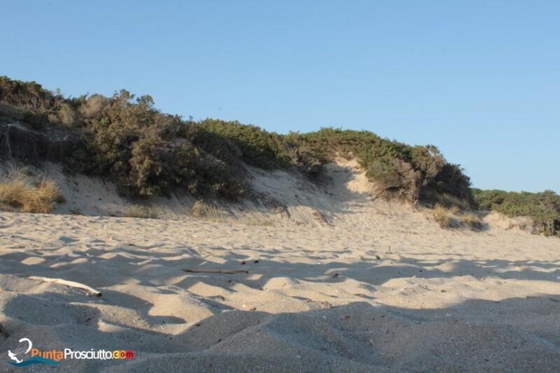 Spiaggia spiaggia riva degli angeli Yow