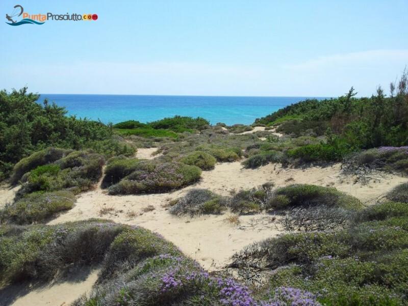 Spiaggia spiaggia zona torre borraco R4h