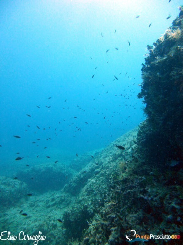 Zona per immersioni immersione orca diving center NRQ