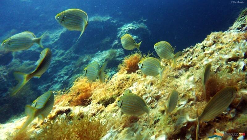 Zona per immersioni immesrione porto cesareo x3 E